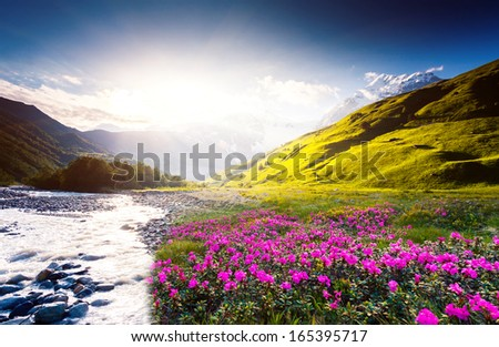 Fantastic sunset and bloom rhododendron at the foot of Tetnuldi glacier Upper Svaneti Georgia Europe Caucasus mountains Beauty world
