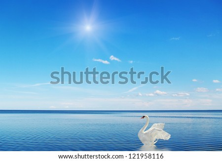 Fantastic swan on the water surface.