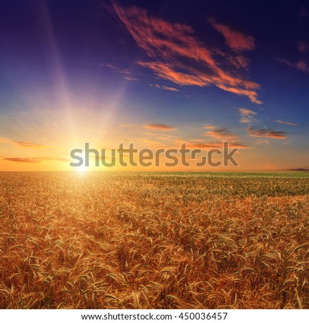 Fantastic wheat field at the sunset. Colorful overcast sky. The idea of a rich harvest concept. Rural landscape under shining sunlight. Soft lighting effects. for the design. creative images #450036457