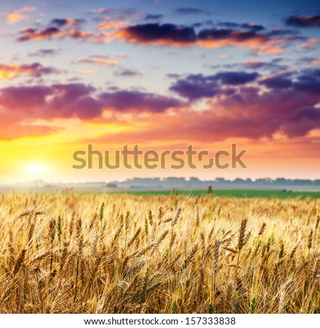 Fantastic wheat field at the sunset. Colorful overcast sky. Ukraine, Europe. Beauty world. #157333838