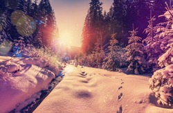 Fantastic winter forest landscape in the sunset. Icy snowy fir trees glowin in sunlight. winter holiday concept. travel day. wonderland in winter.  instagram filter. retro style. creative image.
