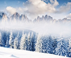Fantastic winter landscape. Dramatic wintry scenery. Creative collage. National Park, Swiss, Europe. Beauty world. Happy New Year!