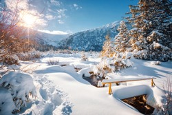 Fantastic winter landscape with spruces covered in snow. Frosty day, exotic wintry scene. Location place Carpathian mountains, Ukraine, Europe. Winter nature wallpapers. Happy New Year! Beauty world.