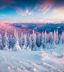 Fantastic winter sunrise in Carpathian mountains with snow cowered trees. Colorful outdoor scene, Happy New Year celebration concept. Artistic style post processed photo.