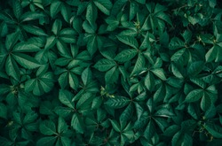 Fantasy and mystery dark green leafy background concept.