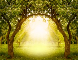 Fantasy apple trees garden with natural arch entrance and sun rays, magical door gates in fabulous green forest, environmental eco background with empty copy space, mysterious summer nature backdrop