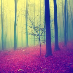 Fantasy blue, green and red autumn season foggy forest.