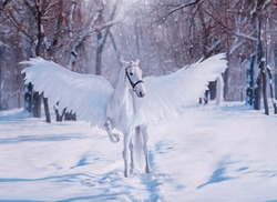 Fantasy divine sunlight fabulous mythical Pegasus. White beautiful creative birds wings. animal stands on backdrop winter snowy forest. Fairy tale christmas. Photography wallpaper. Art costume horse