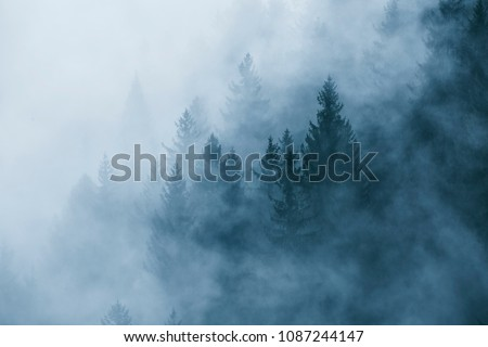 Fantasy foggy forest landscape in the morning fog. Picture was taken in Slovenia, EU.