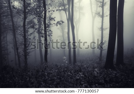 fantasy forest landscape with trees in fog #777130057