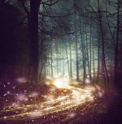 Fantasy forest with firefly lights. Magic colored woodland fairy tale. Dreamy foggy forest tree with winding road background.
