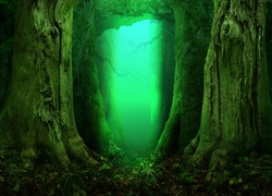 Fantasy forest with mysterious light on background. Old mossy massive trees. Green blue turquoise glow in dark enchanted fairytale woodland