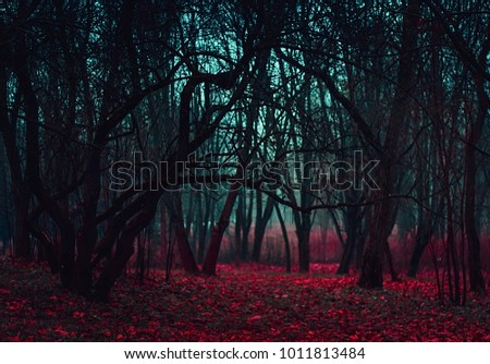 Stock Photo Fantasy magical forest. Stranger winding branches of trees in the mist. Background mysterious atmosphere