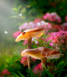 Fantasy magical Mushrooms glade and ladybug in enchanted fairy tale dreamy elf Forest, fabulous fairytale blooming pink rose flower garden in sunny morning and butterflies on mysterious background