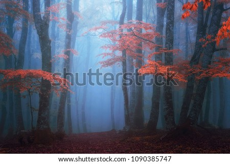 fantasy moody forest in autumn