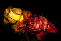 Fantasy portrait of an aged golden red rose couple,black background,detailed texture, smybolic,age,time,couple,pair,surrealistic,decay,fading,fantastic realism, joint,together,love
