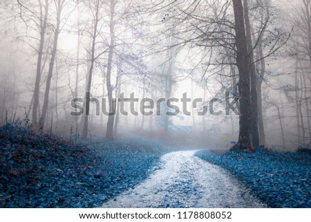 Fantasy saturated foggy forest road. Magic light in the woodland. #1178808052
