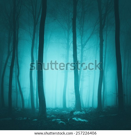 Fantasy turquoise blue light color forest scene background.