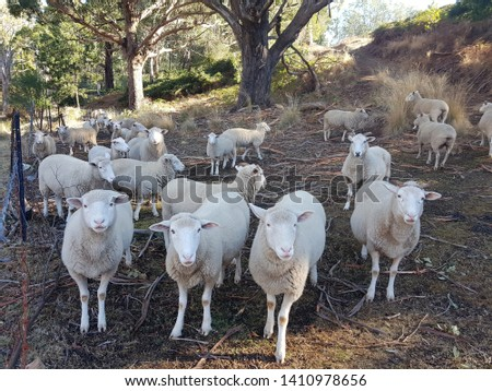 Farm animals, domesticated animals, sheep, cows and horses #1410978656
