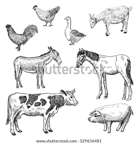 farm animals. . hand drawn set of pictures