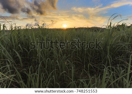 farm field of HANEZI in Okinawa #748251553