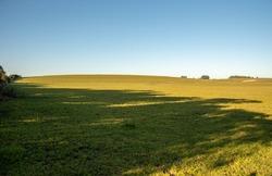 Farm fields in southern Brazil. cattle breeding area. Pasture fields. Small cattle ranching property. Rural landscape.