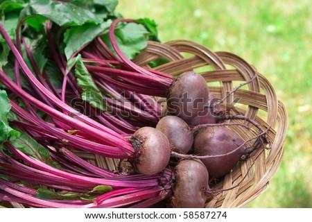 Farm Fresh Beets in a basket.