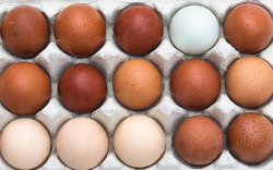 Farm fresh organic brown, speckled, pink, white and creme colored backyard chicken eggs texture in egg box, full frame close up background, self sufficiency concept
