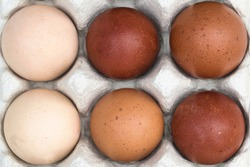 Farm fresh organic brown, speckled, pink, white and creme colored backyard chicken eggs texture in egg box, top view full frame close up background, self sufficiency concept