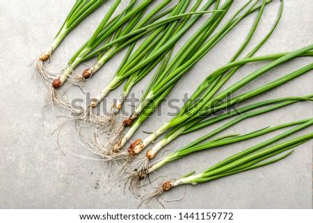 Farm fresh organic vegetables. Freshly harvested onion. Spring green onions.