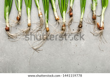 Farm fresh vegetables. Organic, freshly harvested onions, spring green onion, top view.
