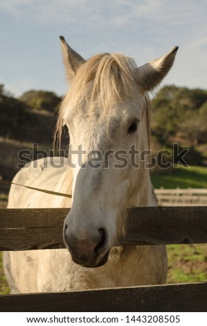 Farm Horse Face looking over a Fence with Hills in the Background #1443208505