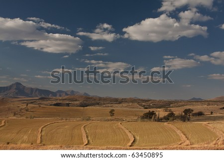 Farm landscape with blue sky and clouds of harvested corn fields