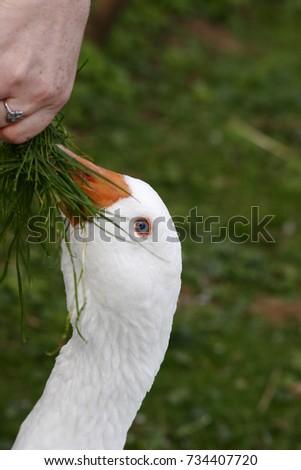 Farm Livestock #734407720
