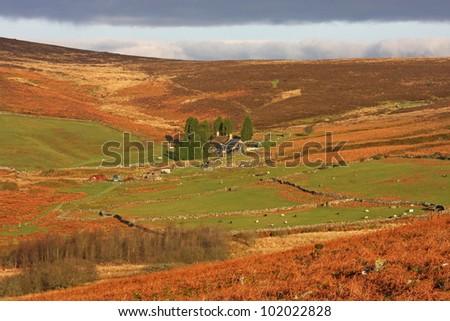 farm on Dartmoor