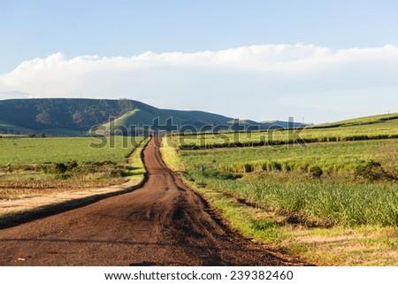 Farm Road Landscape Dirt road through agriculture farming scenic landscape