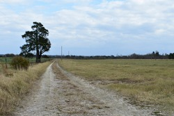Farm road trough a grassy field with strong perspective. A tree as focal point.