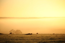 Farm scene country farmland sunrise sunsets, country farm life property paddocks, cow wheat farm photography sunlight sun rays, Australian farmland