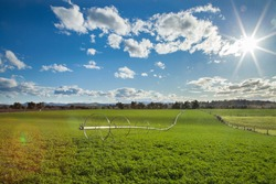 Farm scenery in Australia a lucerne paddock with irrigation sprinkler and sunlight over it