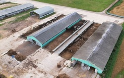 Farm with cows and pigs in the village. Production of milk and Animal husbandry concept. Cow Dairy, top view. Farm animals and Agronomy. The farm for cattle. Cowsheds in the field. Top view.