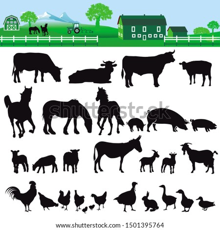 Farm with house cattle, cows and poultry