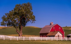 Farm with red barn and lone tree surrounded by white fence among rolling hills of wheat and barley in Palouse Washington America USA
