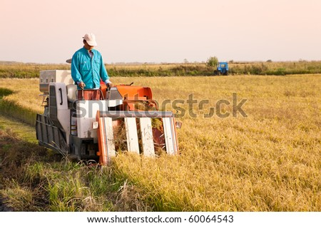 Farm worker harvesting rice