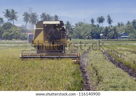Farm worker harvesting rice with harvesting machine in Malaysia