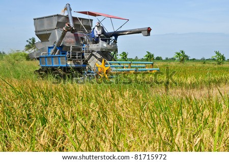 Farm worker harvesting rice with tractor in Thailand