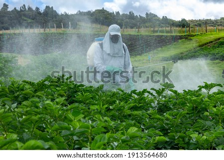 Farmer applying insecticide products on potato crop, Abundant green foliage, healthy leaves in potato crop, man with personal protective equipment for pesticide application, PPE agro Foto stock ©
