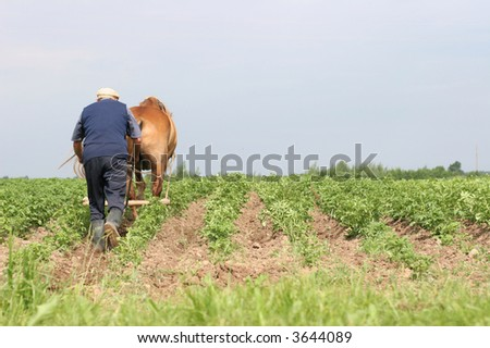 Farmer at work, plowing the potato field rows, june, Belarus