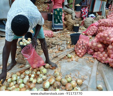 Farmer collects onions