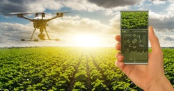 Farmer controls drone with futuristic smartphone. Smart farming and precision agriculture