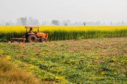 farmer  do paddy farming with Pushcart.